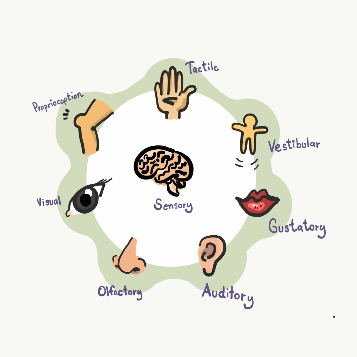 Infographic showing seven of the eight sensory systems that send information to the central nervous system